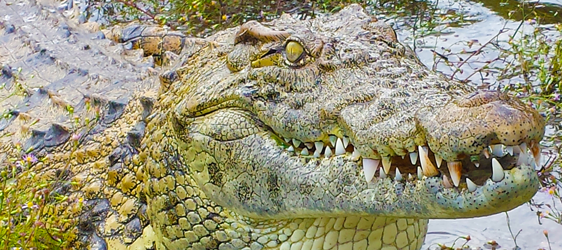 crocodile encounter coupons
